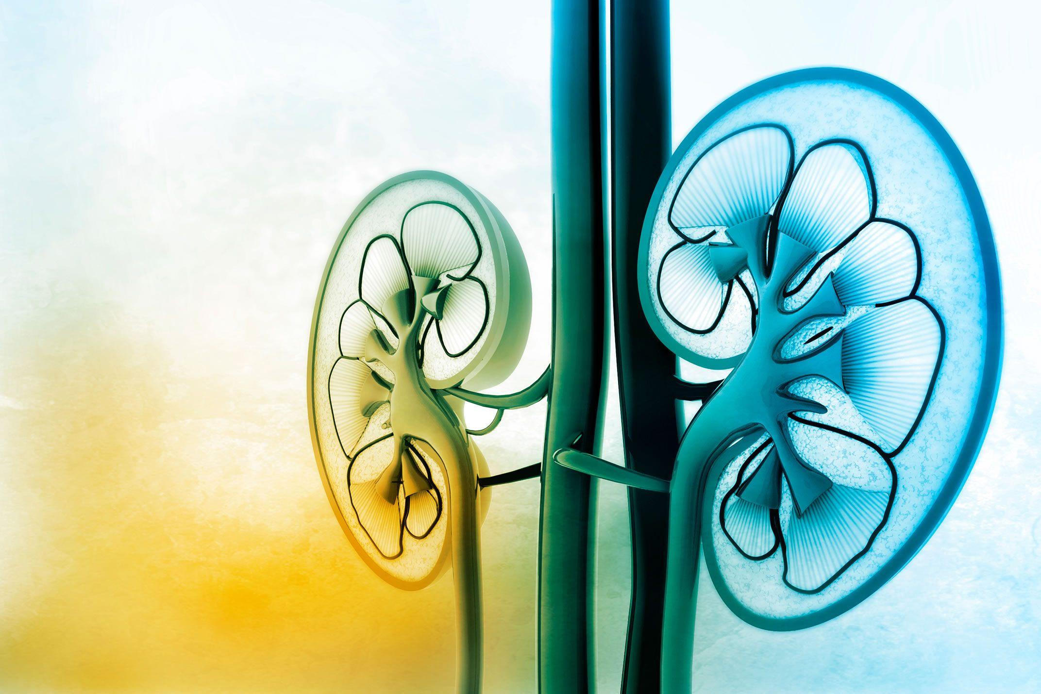 Associação entre Valsartana e Anlodipino Reduz os Valores de Albumina e Creatinina em Doentes Renais Crônicos