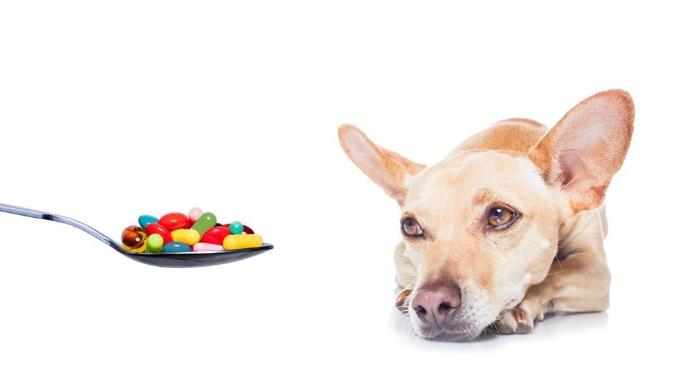 Intoxicação Medicamentosa em Animais