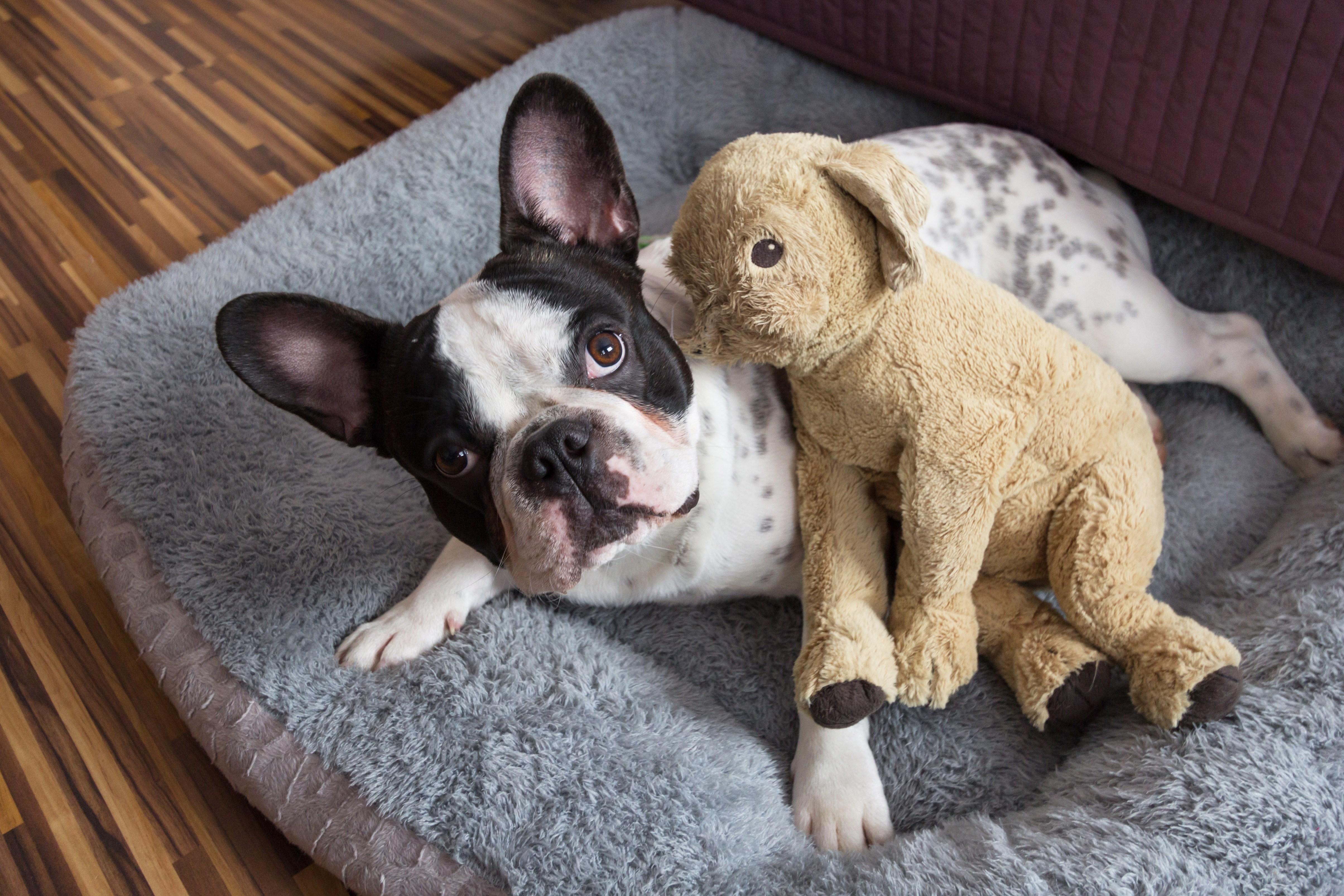 Uso de Vitaminas para cães