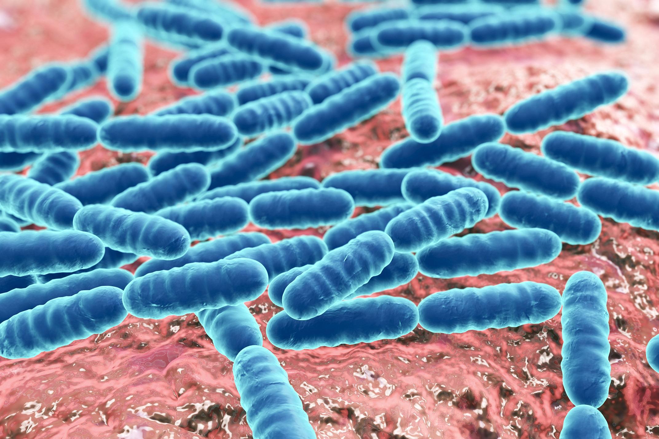 Semelhanças entre Lactobacillus casei e paracasei